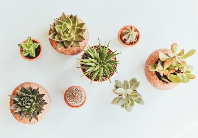 """Plantes d'intérieur slow design pour une déco nature, éco-responsable, durable, écologique, un vrai """"home sweet home"""""""
