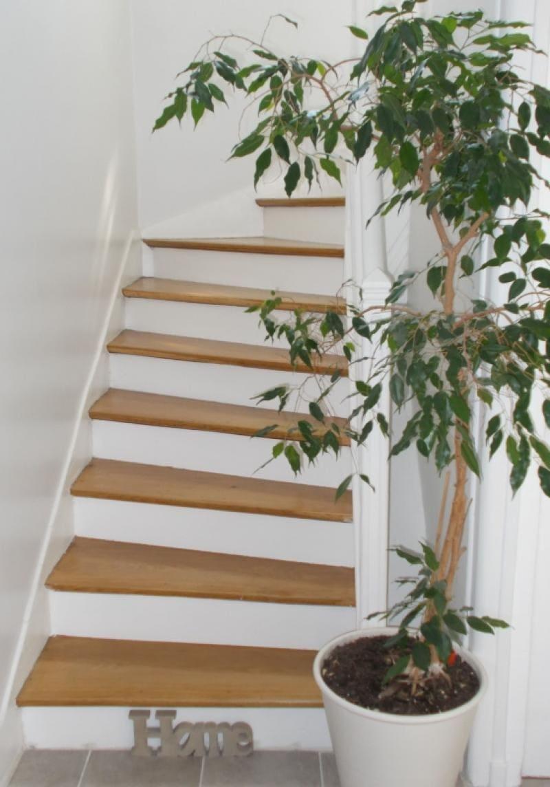 escalier-bois-deco-durable-slowlife
