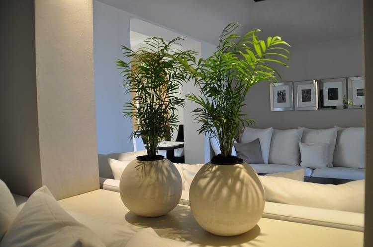 Les plantes d'intérieur subliment la décoration de nos maisons-slow-deco