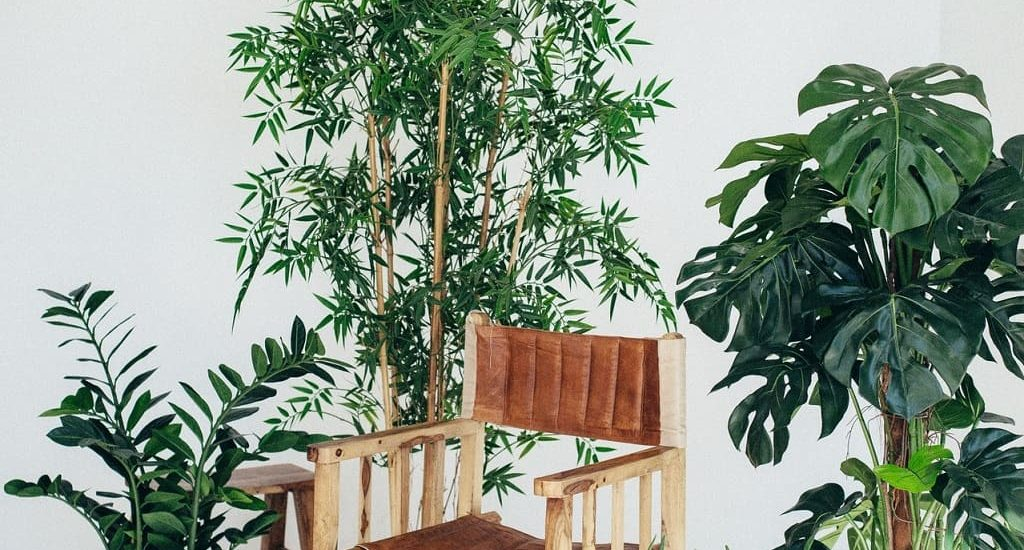 Les plantes d'intérieur sont de véritables trésors pour nos maisons, slow décoration, déco écologique, naturelle, écoresponsable et durable
