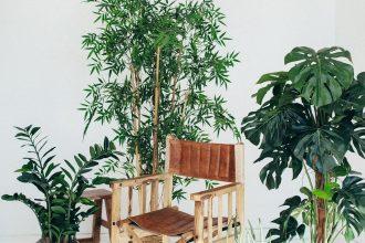 Les plantes d'intérieur sont de veritables trésors pour nos maisons-slow-deco