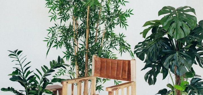 Les plantes d'intérieur sont de véritables trésors pour nos maisons, slow décoration, déco nature, écologique, écoresponsable et durable