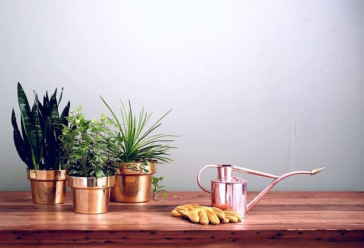 Prendre le temps de s'occupper de nos plantes d'intérieur a de nombreux bienfaits-slow-deco