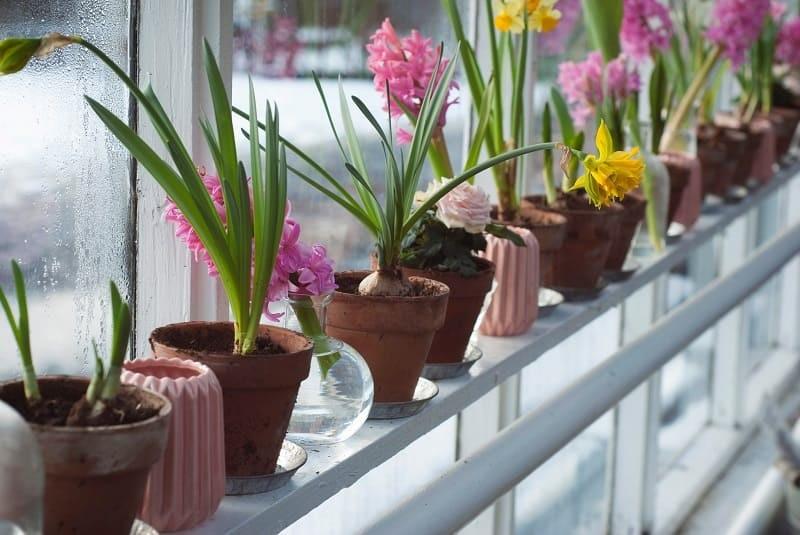 Fleurs en pot, bulbes à replanter après floraison, fleurs bio, fleurs écoresponsables, locales, de saison, commerce équitable, pour une déco nature, écologique, slow deco,
